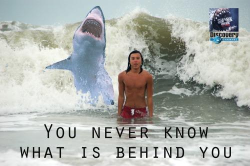 Stensen_shark_wave