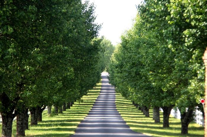 Tree Lining