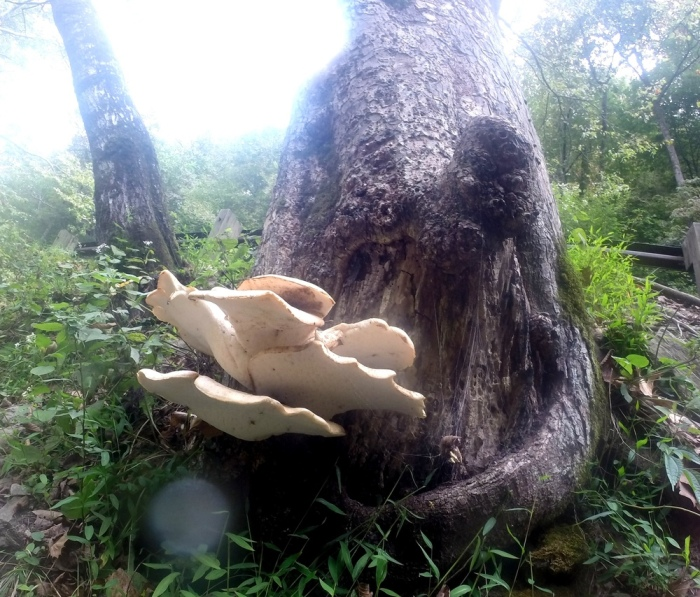 Dig these mushrooms!