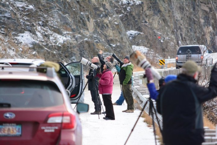 The gather of photogs looking at the dall sheep